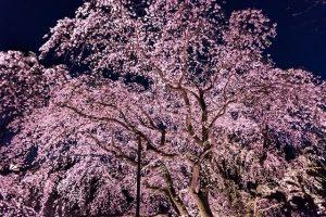 Japón, mejor destino para viajar en primavera